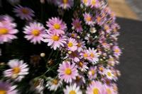 路傍の花---自由散歩@撮影-2 - くにちゃん3@撮影散歩