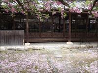 ゆく春を惜しむか八重桜 - じょんのび