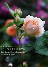 "SONY FE 90mm F2.8 Macro G OSS SEL90M28Gで庭の薔薇。撮影エリアは半径100メートルに限る - 東京女子フォトレッスンサロン『ラ・フォト自由が丘』の""恋するカメラ"""