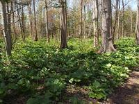 森の息吹 - 北緯44度の雑記帳