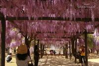 大町藤公園 - 静かな時間