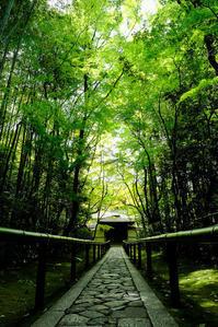 新緑の高桐院 - アオイソラ