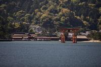 広島旅情・・・厳島神社① - 四季の予感