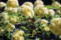 fleurs printanières - momo-dragee