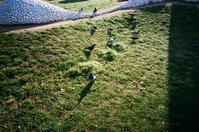 4月の鳩 - アワジシマイッシュウ(某島民)