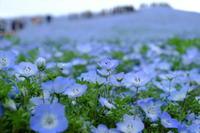 Happy Blue - aya's photo