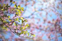 輝く葉 - Today's one photograph