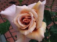 一番花は… - 幸福な時間