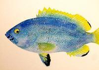 「魚の肖像Ⅱ ひかりの海の魚たち」 - うおろぐ3