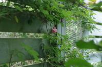 アラーム - お庭のおと