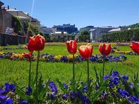 2017年5月10日ザルツブルク『晴』の風景 - ザルツブログ ザルツブルク在住者による、グルメ・文化・旅行の贅沢写真日記