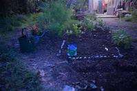 春の夜の菜園 - 世話要らずの庭