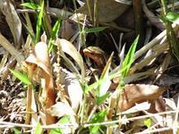 園内に居たカナヘビと花など - つれづれ日記
