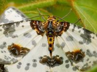 キレイな蛾が居た!マクロで撮るには絶好の被写体だ♪ - 『私のデジタル写真眼』