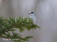 2017年GWに出会った鳥達④ - View in mind