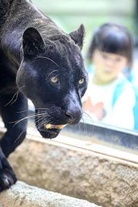 猛獣館は人でいっぱい - 動物園放浪記
