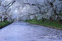 2017 東北桜紀行-早朝弘前城- - さんたの富士山と癒しの射心館