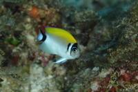 17.5.10 セルフ「居たいた」詐欺(笑) - 沖縄本島 島んちゅガイドの『ダイビング日誌』