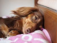 17年5月10日 のんびり~♪ - 旅行犬 さくら 桃子 あんず 日記
