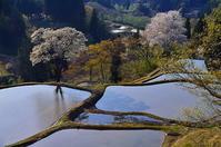 夕時 棚田の桜 - 風の香に誘われて 風景のふぉと缶