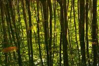 5月のブナ林 - 風の香に誘われて 風景のふぉと缶
