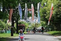 東京スカイツリ-と鯉のぼりのコラボ(^^♪ - 自然のキャンバス