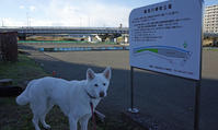 Vol.1180 鶴見川樽町公園 - 小太郎の白っぽい世界