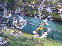 #235 Spring Gradation 春のグラデーション - THIS MOMENT