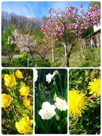 GW八ヶ岳 その2 - マーブルDiary
