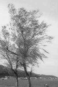 風吹く日 - 気ままにお散歩