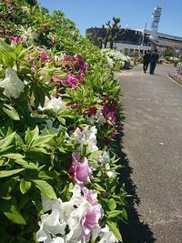 5/5 こんぴらさんから瀬戸大橋へ - はっぴ~かふぇ