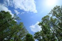 緑が綺麗、空が青い。 - 平凡な日々の中で