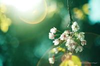 spring scenery - 一雫  -ひとしずく-