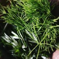自然の恵み 野草は薬草。 - ナチュラル キッチン せさみ & ヒーリングルーム セサミ