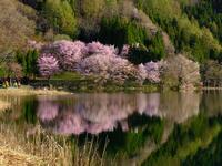 春色湖面 - デジタルで見ていた風景