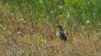 日本海の離島の鳥達その4 - Life with Birds 3