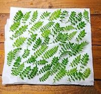 イエシゴトVol.208 木の芽の保存・ちょっと実験 - YUKA'sレシピ♪