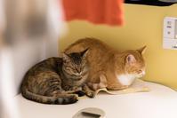 お風呂場のチャルとイッちゃん - 猫と夕焼け