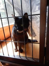 花組の華ちゃん、星組の夜ちゃん - ご機嫌元氣 猫の森公式ブログ