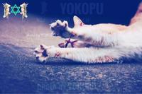 【2週目終了】猫とつき合う法 【大阪】 - よこぷーのリムショットっ!