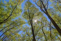 薫風の森 - ひつじ雲日記