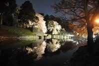 彦根城の夜桜'2017 - a&kashの時間。