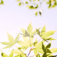 "p601 "" 行解相応 "" 蟹ヶ谷    2017年5月11日 - 侘び寂び"