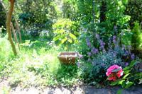 アブラムシの天敵(ヒラタアブ、テントウムシ、アブラバチ, etc.) - 世話要らずの庭