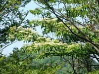 ミヅキの花 - 白壁荘だより  天城百話