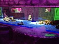 サンシャイン水族館「もうどく展2」~防御するための毒をもつ生物~ - 続々・動物園ありマス。
