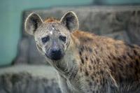 「セレン」と「フラハ」 - 動物園放浪記