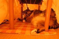 ブガルの膀胱炎 その後 - 「両手のない猫」チビタと愉快な仲間たち