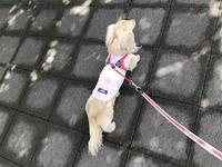 17年5月11日 夏日&変な生き物(笑) - 旅行犬 さくら 桃子 あんず 日記