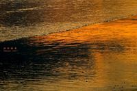 第733回  橙色 - 湘南群青 -The sunset  blue -